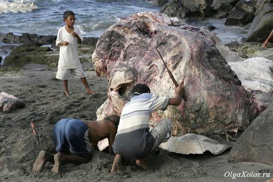 Разделка китовой туши на пляже в Ламалере