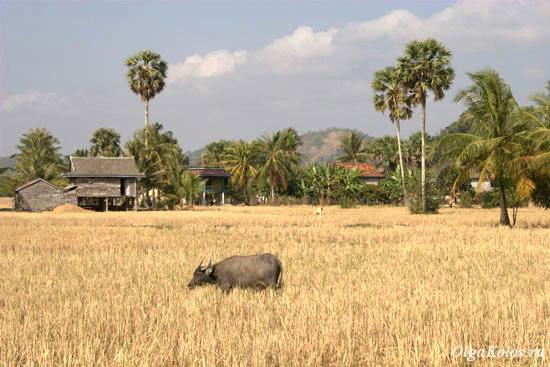По дороге из Кампота в Кеп