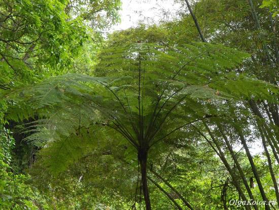 Деревья рядом с Минкой