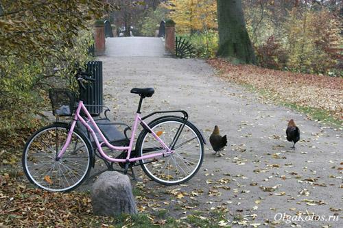 Мой розовый велосипед и куры в парке по пути на работе