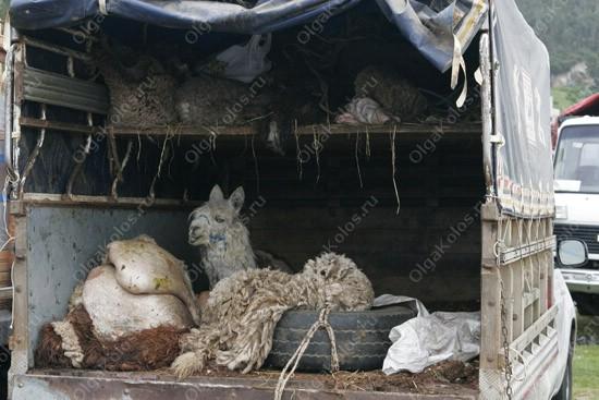 Рынок в Отавало