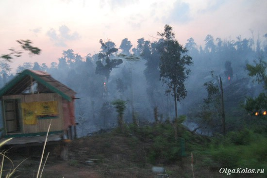 Рукотворные лесные пожары