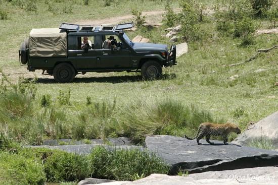 Фотоохота на леопарда