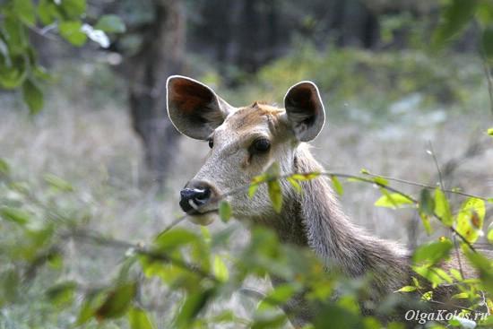 Национальный парк Рантамбор