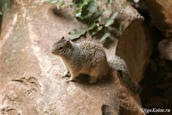 Национальный парк Zion