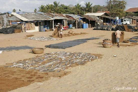 Рыбный рынок в Негомбо