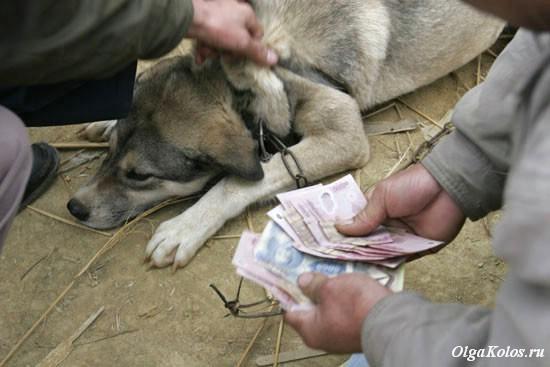 Продажа собаки на мясо